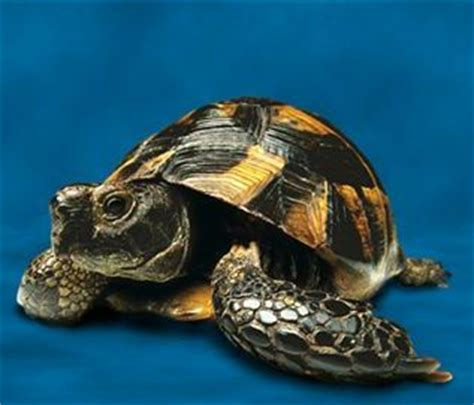 Different Types of Turtles That You Can Bring Home - The