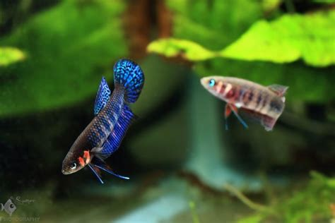 Betta, Tanks and To be on Pinterest