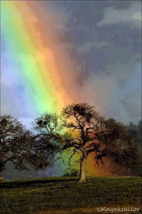 A Morning with Colorful Rainbow - XciteFun