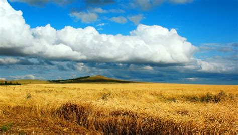 Ukraine Takes 'World's Largest Grain Exporter' Title From