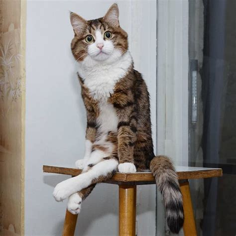 This Cat Has A Disability But His Facial Expressions Are