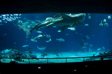 Largest and Best Aquariums in the World 2018 (Top 10